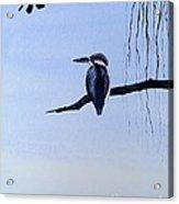 Japanese Kawasemi Kingfisher Feng Shui Water Acrylic Print