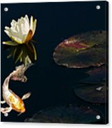 Japanese Koi Fish And Water Lily Flower Acrylic Print