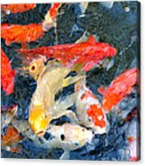 Japanese Koi Pond Acrylic Print