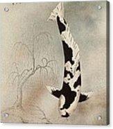 Japanese Koi Utsuri Mono Willow Painting  Acrylic Print