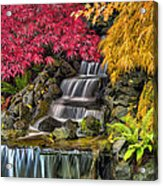 Japanese Laced Leaf Maple Trees In The Fall Acrylic Print