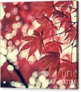 Japanese Maple Leaves - Vintage Acrylic Print