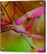 Japanese Maple Seedling Acrylic Print