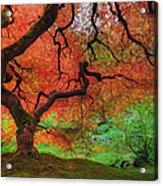 Japanese Maple Tree In Autumn Acrylic Print