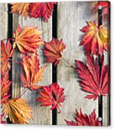 Japanese Maple Tree Leaves On Wood Deck Acrylic Print