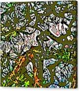 Japanese Pine Acrylic Print by Jean Hall