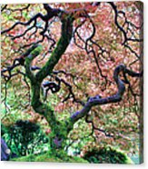 Japanese Tree In Garden Acrylic Print
