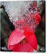 Ice Flower Acrylic Print