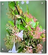 Japonica In Autumn Acrylic Print