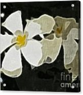 Jasmine Expressive Brushstrokes Acrylic Print