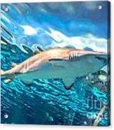 Jaws Acrylic Print