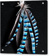 Jay Feather 2 Without Text Acrylic Print