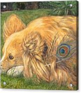 Jealous Jessie Acrylic Print by Emily Hunt and William Holman Hunt