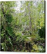 Jean Lafitte National Preserve Swamp Louisiana Acrylic Print