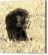 Jean Lafitte's Headless Graveyard Cat Acrylic Print