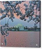 Jefferson Memorial Cherry Blossoms Acrylic Print