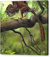 Jeholornis Prima Perched On A Tree Acrylic Print by Sergey Krasovskiy