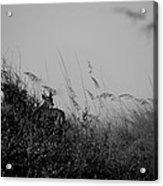 Jekyll Deer In Black Acrylic Print