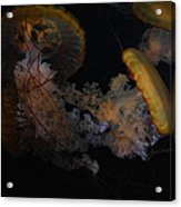 Jelley Fish Acrylic Print
