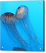 Jelly Fish 5d24945 Acrylic Print by Wingsdomain Art and Photography