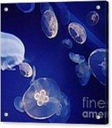 Jelly Fish Acrylic Print by John Malone