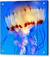 Jellyfish 3 Acrylic Print by Dawn Eshelman