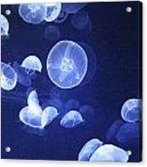 Jellyfish At Loceanographic Aquarium Acrylic Print