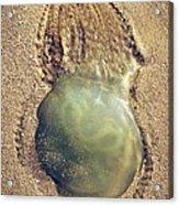 Jellyfish Acrylic Print by Carlos Caetano