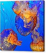 Jellyfish IIi Acrylic Print
