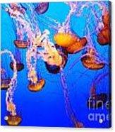 Jellyfish In Abundance Acrylic Print