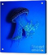 Surreal Australian Jellyfish In Blue Acrylic Print