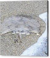 Jellyfish On The Sand Acrylic Print