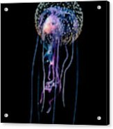 Jellyfish  Pelagia Noctiluca  With Fish Acrylic Print