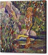 Jerrys Tiger Acrylic Print