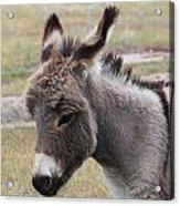 Jerusalem Donkey Acrylic Print