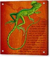 Jesus Lizard Acrylic Print