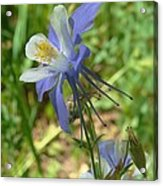 Jewel In The Glade 2 Acrylic Print