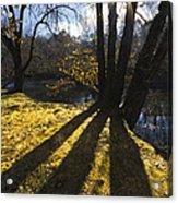 Jewel In The Trees Acrylic Print by Debra and Dave Vanderlaan