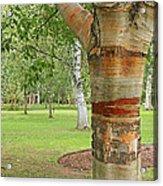 Jewel In The Woods Acrylic Print
