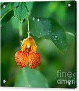 Jewel Like II Acrylic Print
