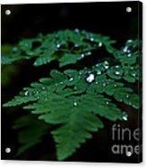 Jeweled Fern Acrylic Print by Chris Heitstuman