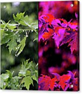 Jeweled Rain Transformed Acrylic Print