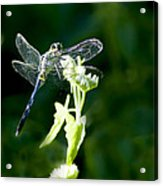 Jeweled Wings Acrylic Print