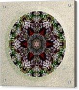 Jewels Of The Sea  Acrylic Print
