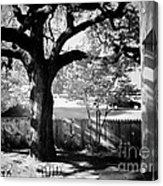 Jfk-the Stockade Fence-dealy Plaza Acrylic Print
