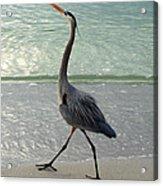 Strutting The Beach Acrylic Print