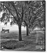 John Deer Tractor And The Avenue Of Oaks Acrylic Print by Scott Hansen
