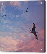 Jonathan Fly Free Acrylic Print