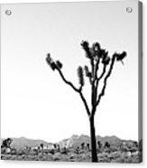 Joshua Tree No. 02 Acrylic Print