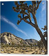 Joshua Tree Afternoon Acrylic Print